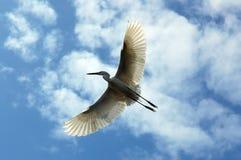 egrets Стоковые Изображения