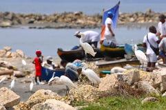 Egrets await fishing catch. Cartagena Stock Photo