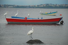Egrets and boats Royalty Free Stock Image