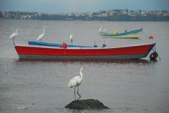 Egrets e barcos Imagem de Stock Royalty Free