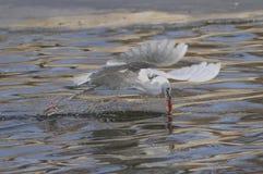 Egrets e garças-reais Foto de Stock