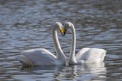 Egrets i czaple Zdjęcia Stock