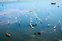 Egrets stand and wait for fish crab shrimp and seafood flow by e. Egret group stand and wait for fish crab shrimp and seafood flow by ebb tide royalty free stock photography