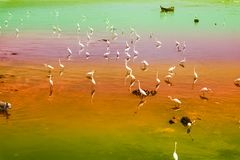 Egrets stand and wait for fish crab shrimp and seafood flow by e. Egret group stand and wait for fish crab shrimp and seafood flow by ebb tide stock photos