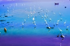 Egrets stand and wait for fish crab shrimp and seafood flow by e. Egret group stand and wait for fish crab shrimp and seafood flow by ebb tide stock photography