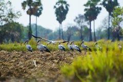 Egrets stock photo
