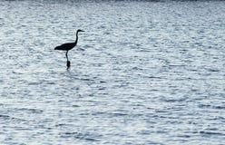 egretsilhouette Royaltyfri Bild