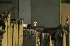 Egrettagarzetta in aard is gemakkelijk te vinden stock foto