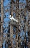 egrits使多雪的沼泽二白色套入的佛罗里&#36 库存图片