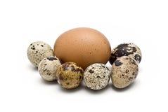 Egss ed uno delle quaglie da una gallina. Fotografia Stock Libera da Diritti
