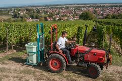 Harvest in alsatian vineyard with tractor Stock Photos