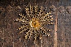 Eguzkilore, traditional decoration, protection for bad spirits, in Alava. Eguzkilore, traditional decoration, protection for bad spirits royalty free stock photos