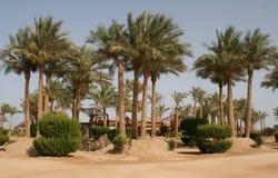 Egypt beach landscape Stock Image