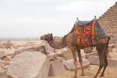 Egypt Cairo - Giza. General view of pyramids Stock Image