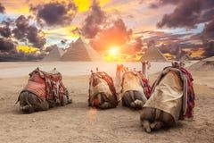 Egypt Cairo - Giza. General view of pyramids Stock Photo