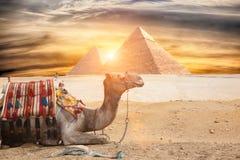 Egypt Cairo - Giza Stock Images