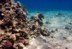 Egypt coral reef near Dahab in real colors Stock Image