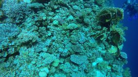 Egypt Dahab diving in the red sea.  stock footage