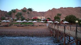Egypt Dahab palm trees and sea.  stock video