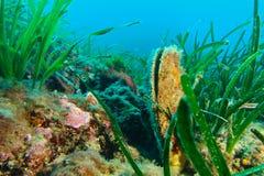 egypt fotografii tropikalne podwodne wody Zdjęcie Royalty Free