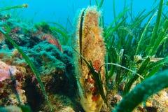 egypt fotografii tropikalne podwodne wody Fotografia Stock