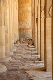egypt hatshepsuttempel Arkivfoto