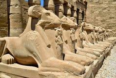 egypt karnaktempel Arkivbilder