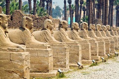 Egypt, Luxor, Amun Temple of Luxor. Royalty Free Stock Photos