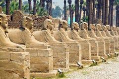Egypt, Luxor, Amun Temple of Luxor. Africa, Egypt, Luxor, Amun Temple of Luxor Royalty Free Stock Photos