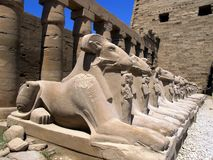 Small alley of the ram-headed sphinxes in front of the Karnak temple in Luxor royalty free stock images
