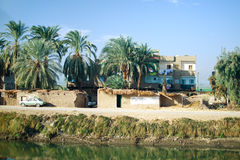 Egypt. Oasis next to Nile river Royalty Free Stock Image