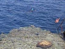 Egypt Os linguistas de Snork examinam o recife de corais video estoque