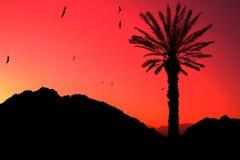 egypt pustynny zmierzch Zdjęcia Royalty Free