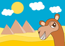 Egypt pyramid and the happy dromedary Stock Images