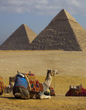 Egypt pyramids. Pyramids in egypt with camels Royalty Free Stock Photography