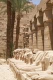 Egypt ram Stock Photos