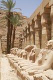 Egypt ram Royalty Free Stock Photo