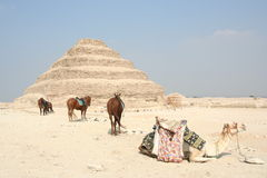 egypt saqqara Arkivbild