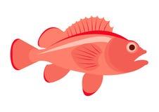 Egypt scarab beetle. Sea bass fish  illustration. Sea bass on white background. Sea bass . Perch fish illustration. Sea bass isolated Stock Photos