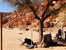 Beduins in the desert Stock Image