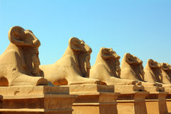 Egypt statues of sphinx in karnak temple Stock Images