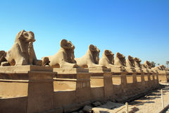 Egypt statues of sphinx in karnak temple Royalty Free Stock Image