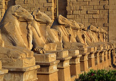 Egypt statues of sphinx in karnak temple Royalty Free Stock Photos