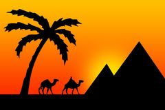 Egypt sunset. Sunset in Egypt with palm tree, camels and pyramids Stock Photography