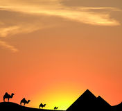 Egypt sunset. Camels, pyramids and sand dunes silhouetted against the egyptian sunset sky Stock Image