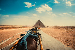 Egypt. A trip in Egypt and the pyramids stock image