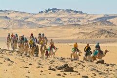 Egypte - τουρίστες που οδηγούνται από τους οδηγούς καμηλών έξυπνη στοκ φωτογραφίες