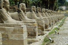 Egypte Royalty-vrije Stock Afbeeldingen