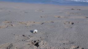 Egypte, Hurghada, kleine het strandlooppas van het krabzand  stock video