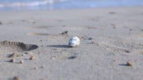 Egypte, Hurghada, kleine het strandlooppas van het krabzand  stock videobeelden